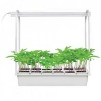 Набор «Минисад», светильник для растений светодиодный с подставкой. ULT-P34-10W/SPBR IP20 WHITE 12  Спектр для рассады и досвечивания в период роста. 12 кашпо в/к, белые. TM Uniel